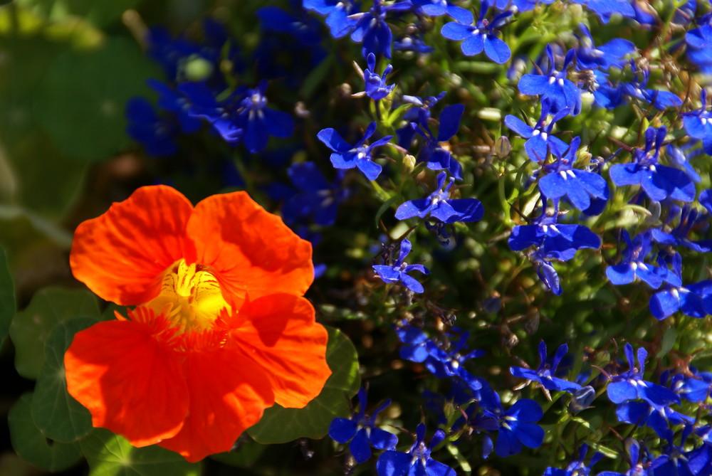 Blumenkontrast