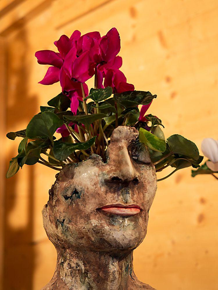 blumenkopf oder kopfblumen, das ist die frage