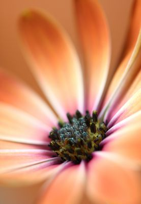 Blumenkraft