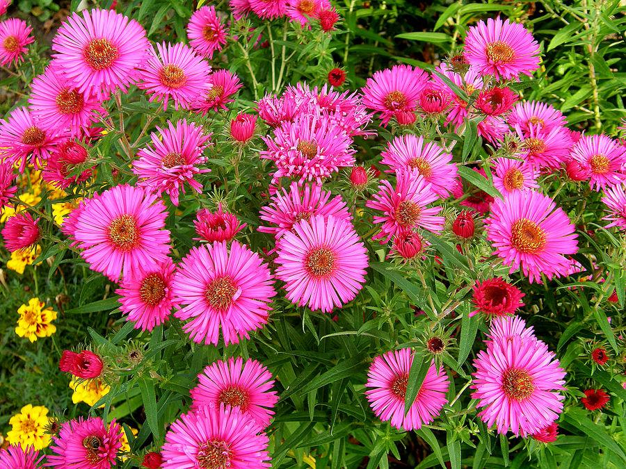 Blumenlandschaft