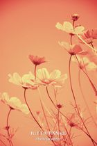 Blumenlandschaft Orange
