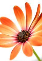 Blumenleuchten
