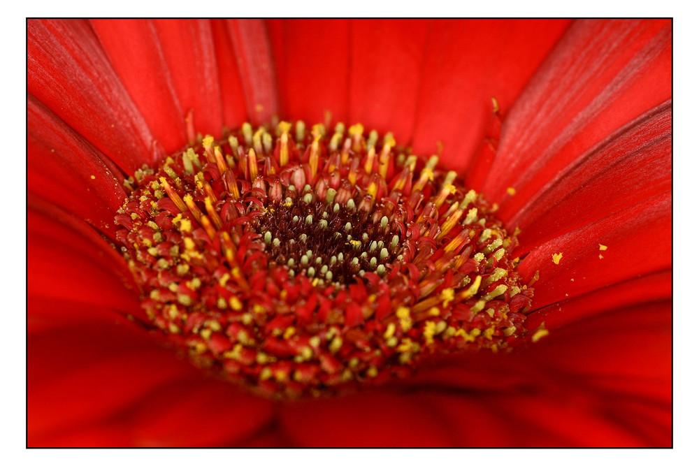 Blumenmakro - 05