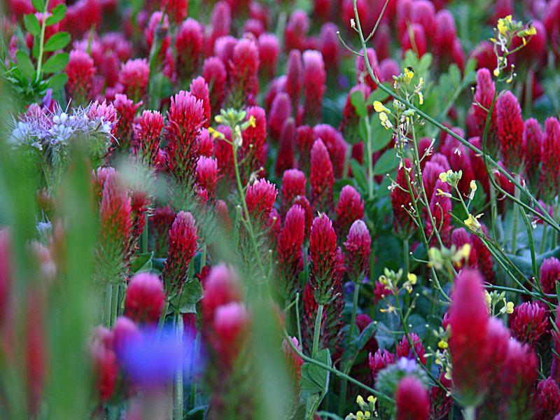 Blumenmeer 2