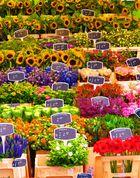 Blumenmeer :)