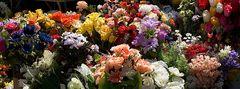 Blumenmeer in Ungarn