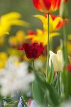 Blumenmeer3