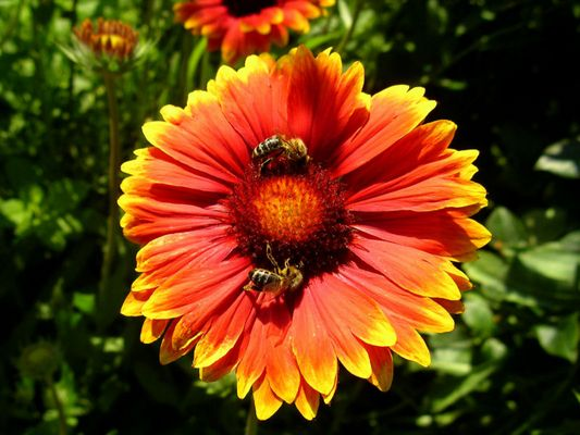 Blumenmeeting