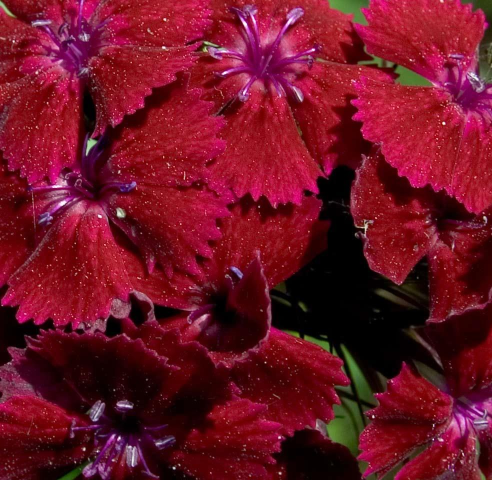 Blumenmehr