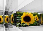 Blumenmuseum