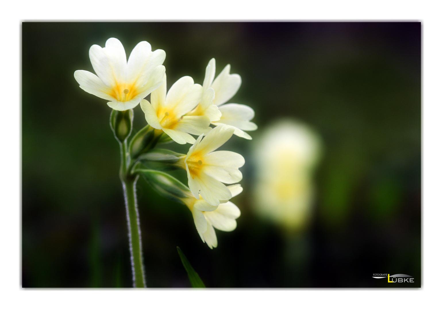 Blumenmuster 3