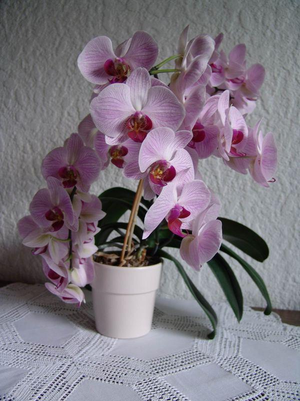Blumenmutters ganzer Stolz