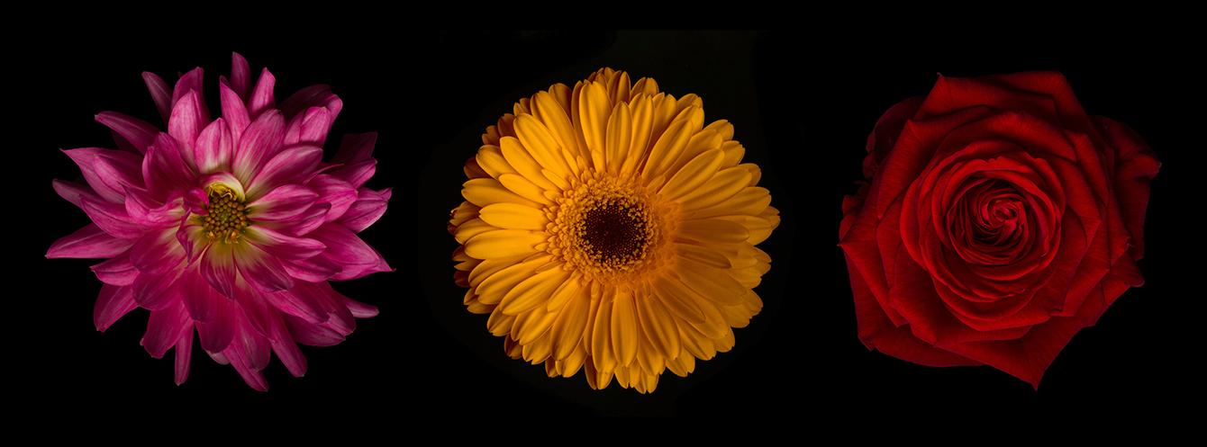 Blumenpanorama