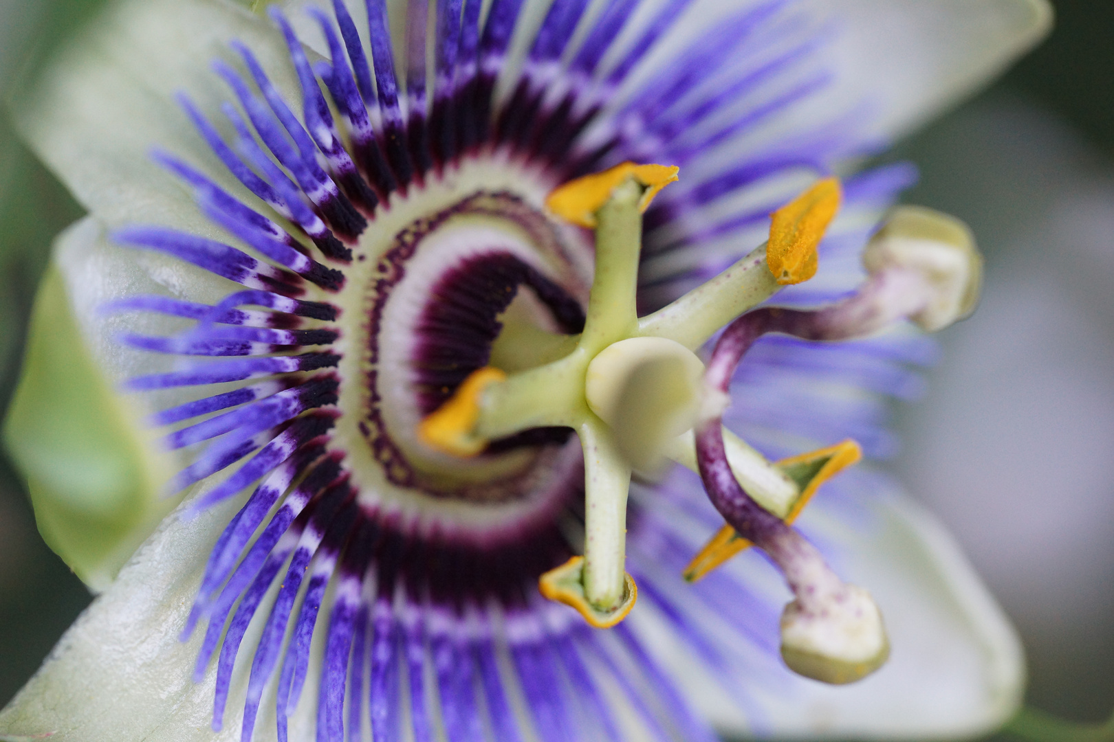Blumenpassion I