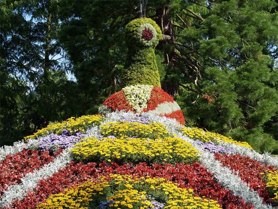 Blumenpfau...