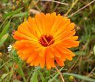 Blumenpflückwiese