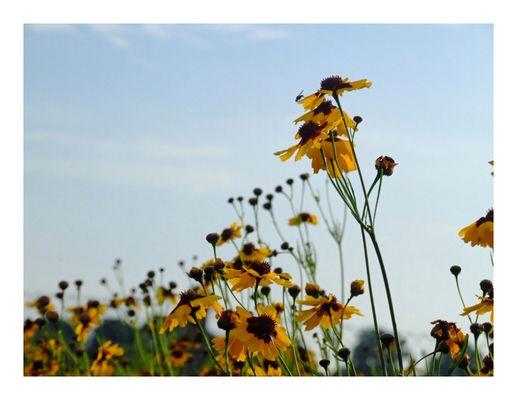 Blumenporträt