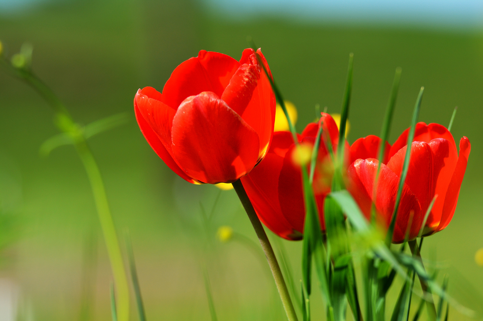 Blumenpracht 1
