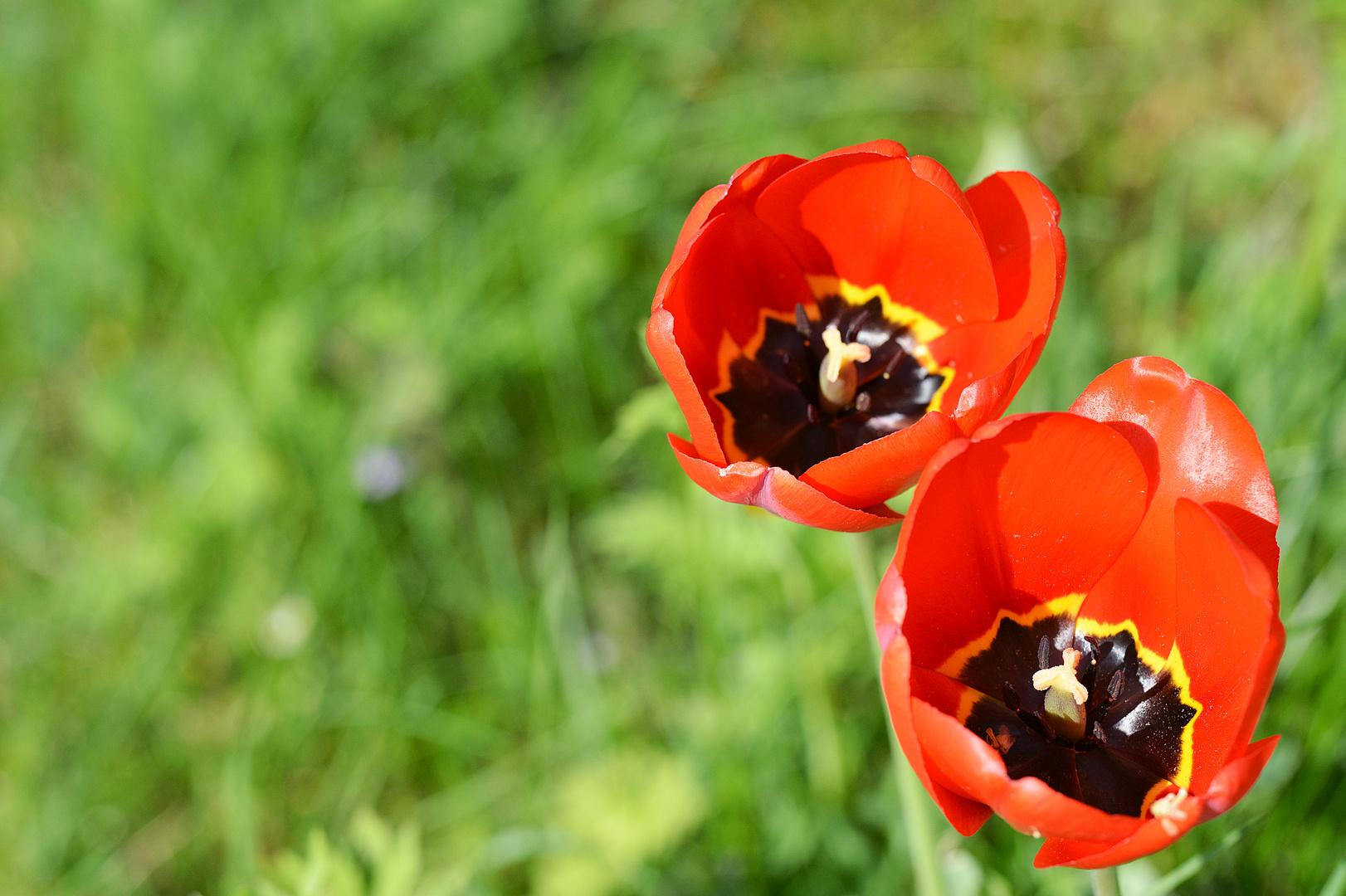 Blumenpracht 2