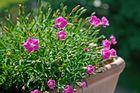 Blumenpracht auf Balkon