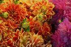 Blumenpracht im Public Market, Seattle