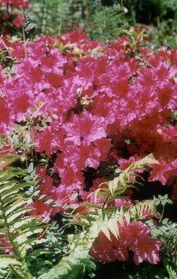 Blumenpracht-Irland