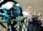 Blumenrad