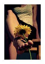 Blumensaat 3