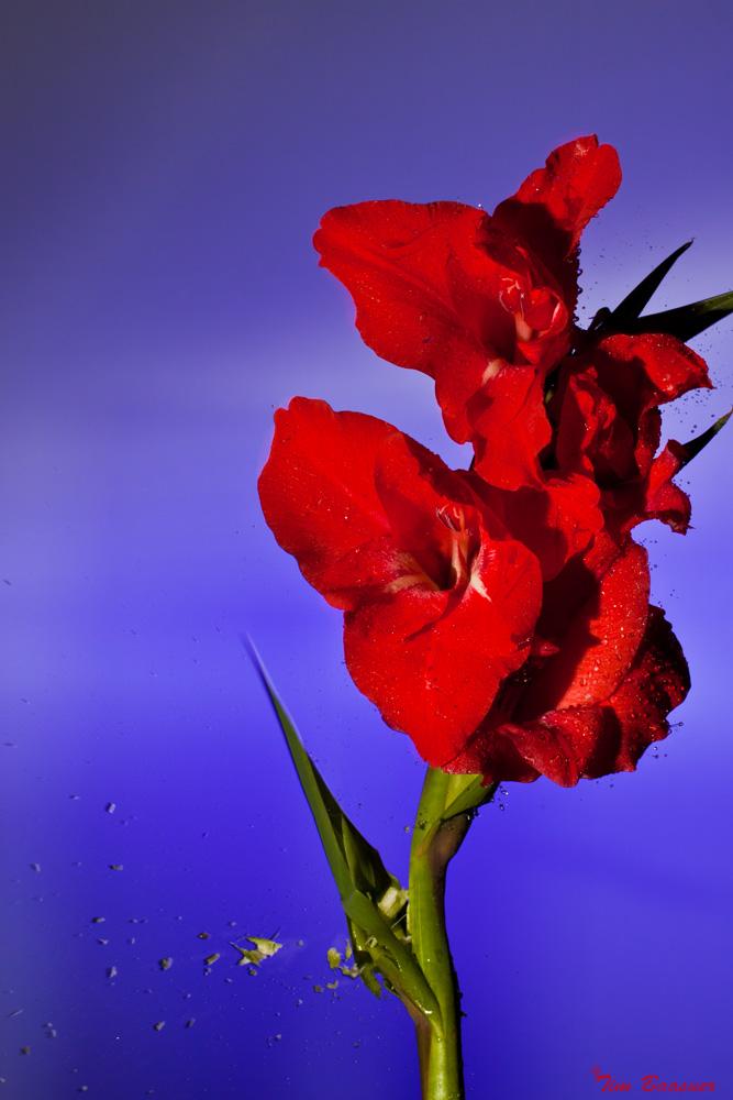 Blumenschnellpflückung