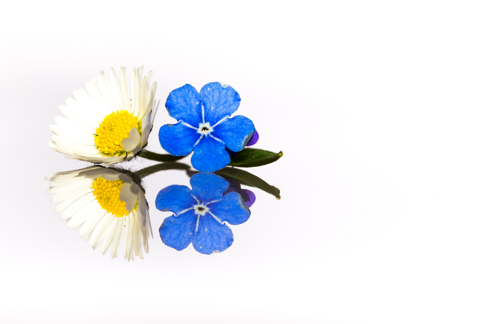 Blumenspiegel