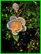 Blumensprache. VII