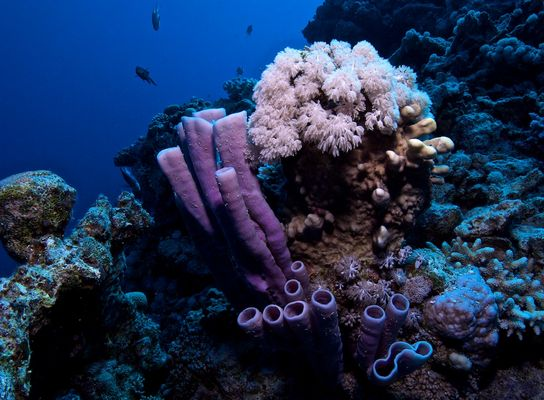 Blumensträuße der Meere (V 2.)