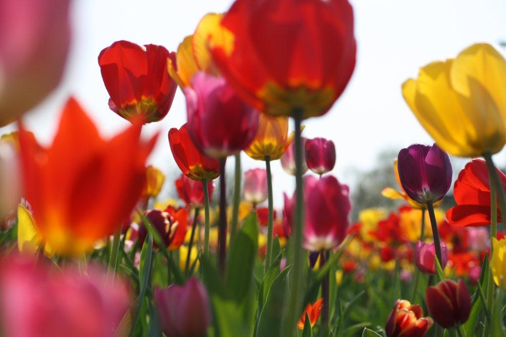 Blumenstrauß ganz natürlich