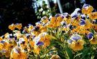 Blumenteppich²