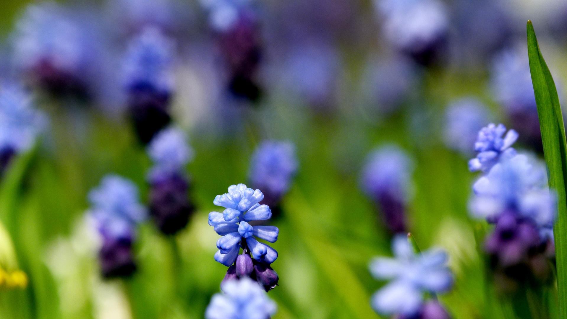 Blumenteppich im Frühling
