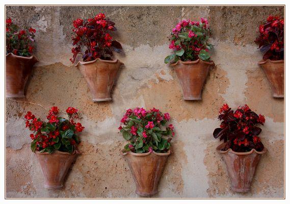 Blumentöpfe -Pots de fleurs