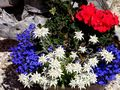 Blumentopf by Robert Renggli