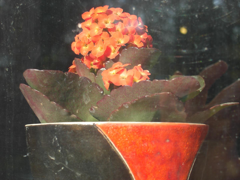 Blumentopf im Fenster