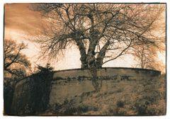 Blumentopfbaum