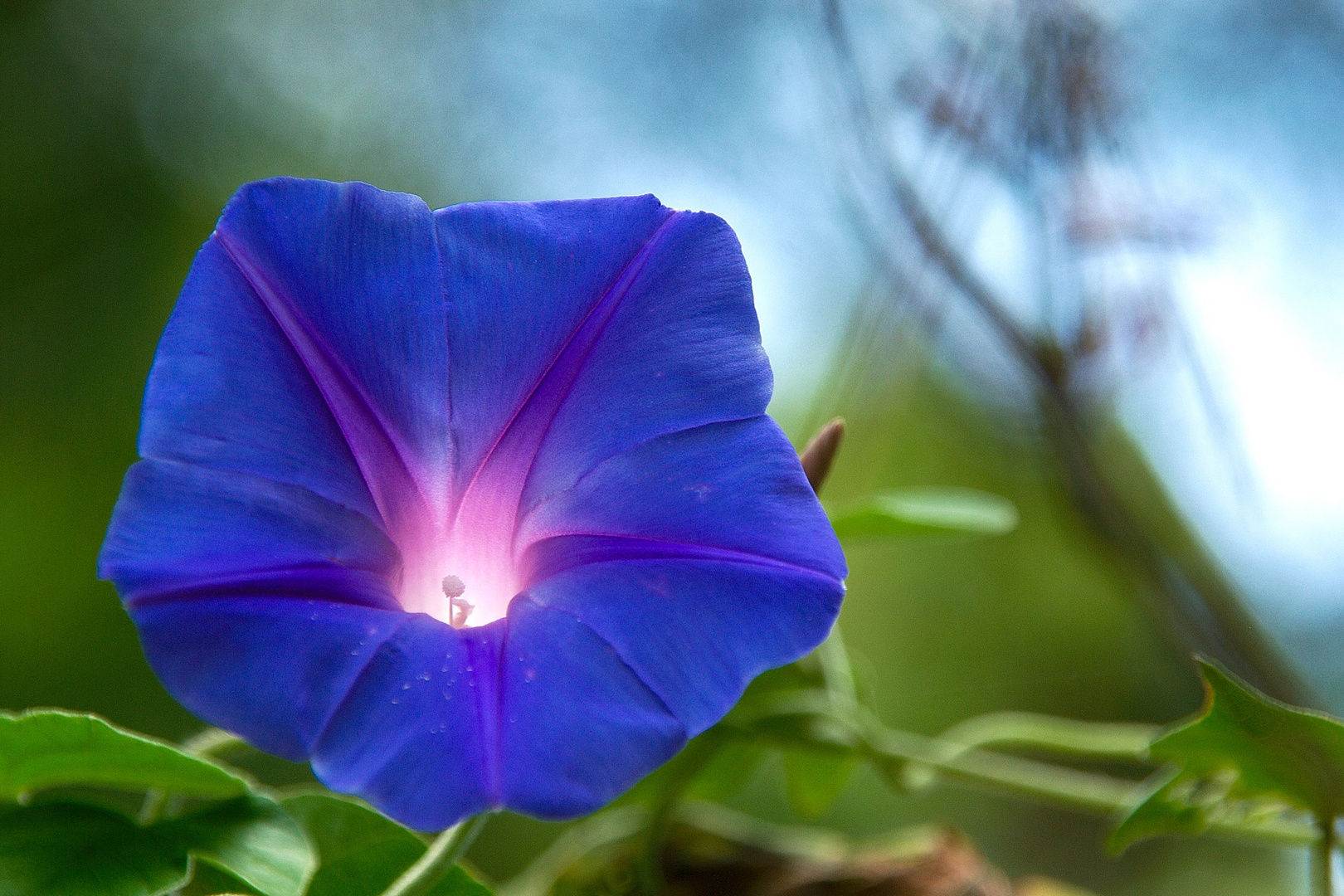 Blumenvulkan