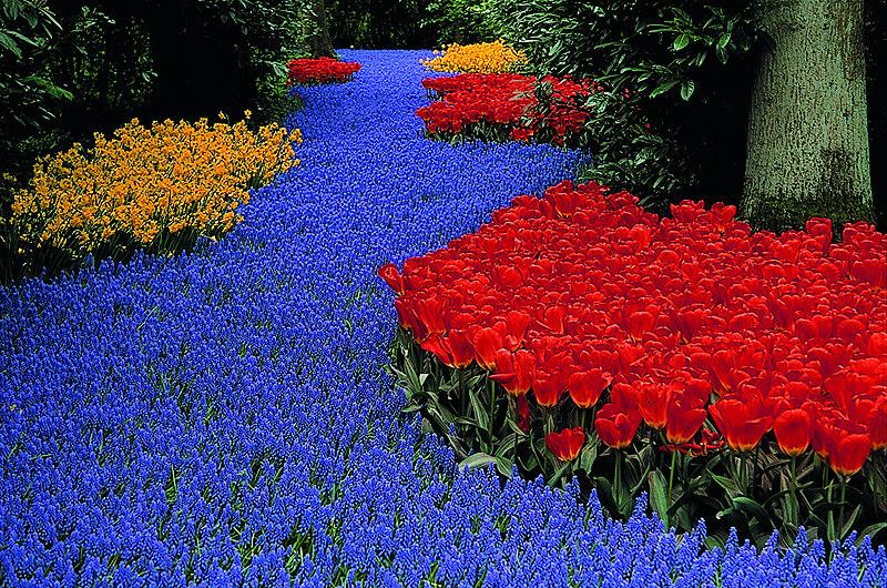 Blumenwege...