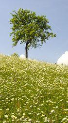 Blumenwiese....