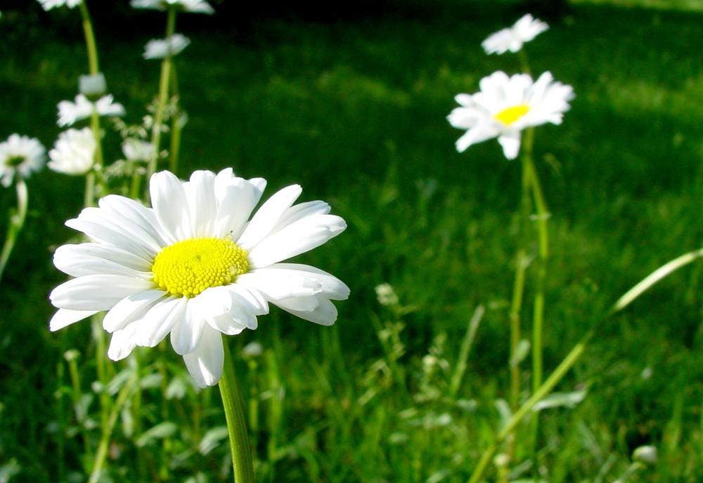 [Blumenwiese]