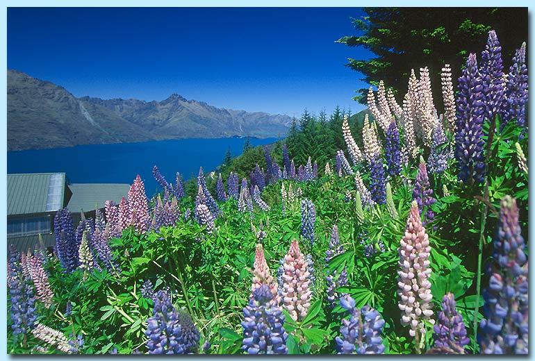 Blumenwiese auf Bob's Peak