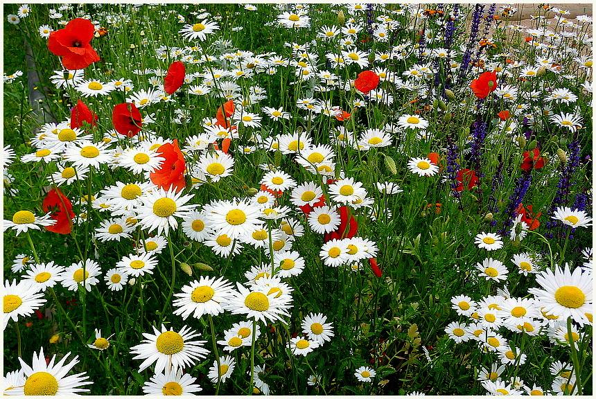 Blumenwiese.........