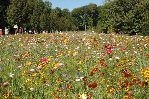 Blumenwiese bei Schloss Wolfsgarten