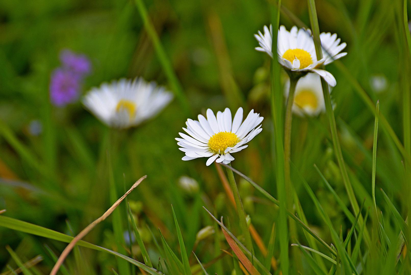 Blumenwiese!