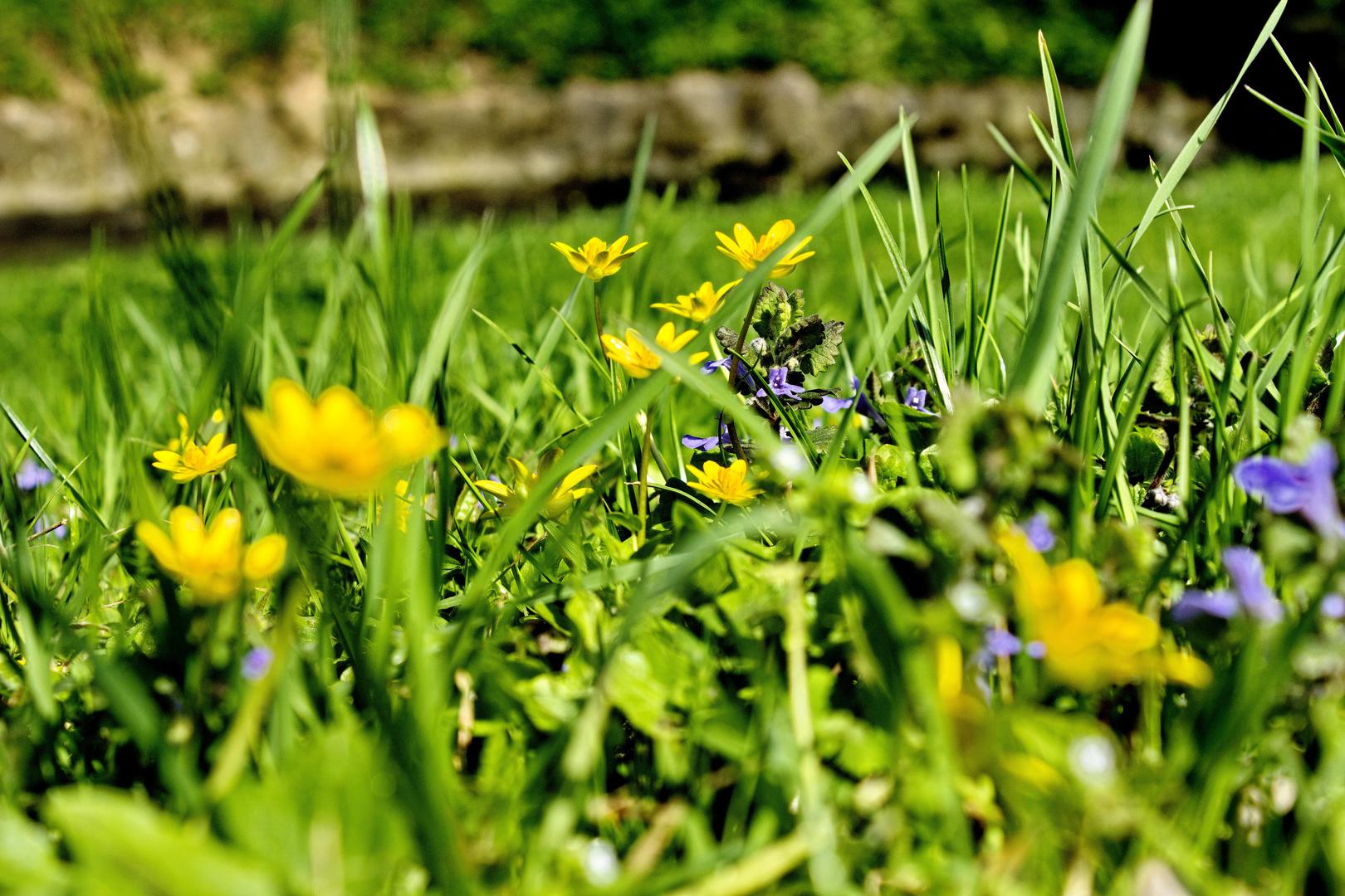Blumenwiese Fokus