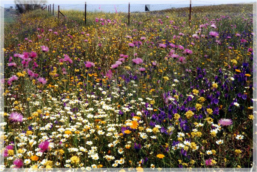 Blumenwiese gescennt