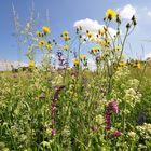Blumenwiese im Frühsommer.......
